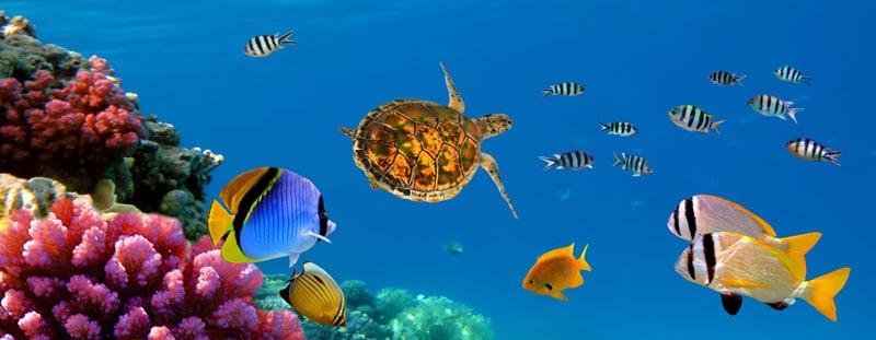 Dykning i Sharm el-Sheikh er helt fantastisk